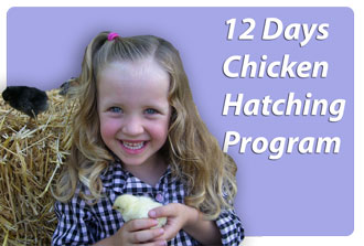 12 Days Chicken Hatching Program