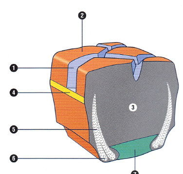 Cross Section of Cushion Tyre